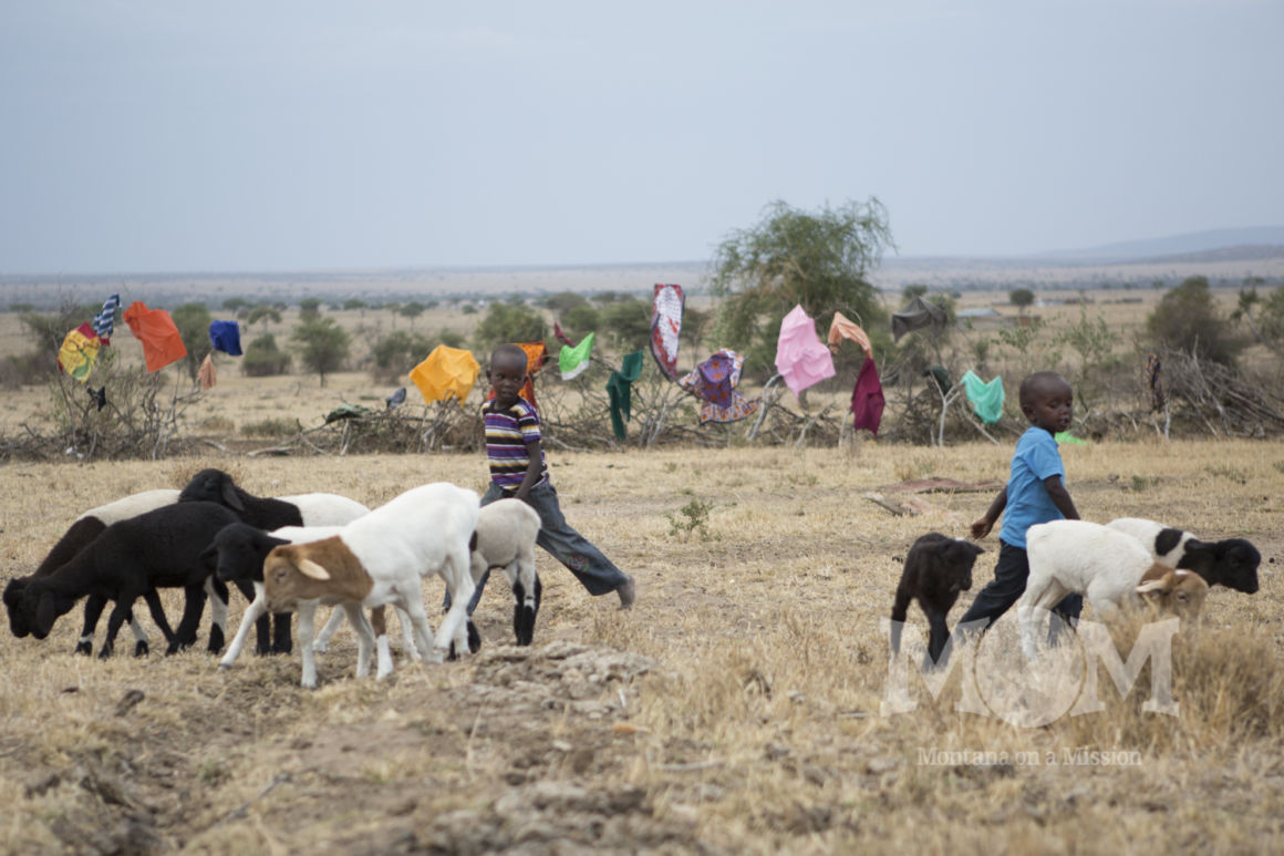 Young boys are eager to help the big boys. They practice their skills by herding the lambs and kids into the pen within their manyatta.