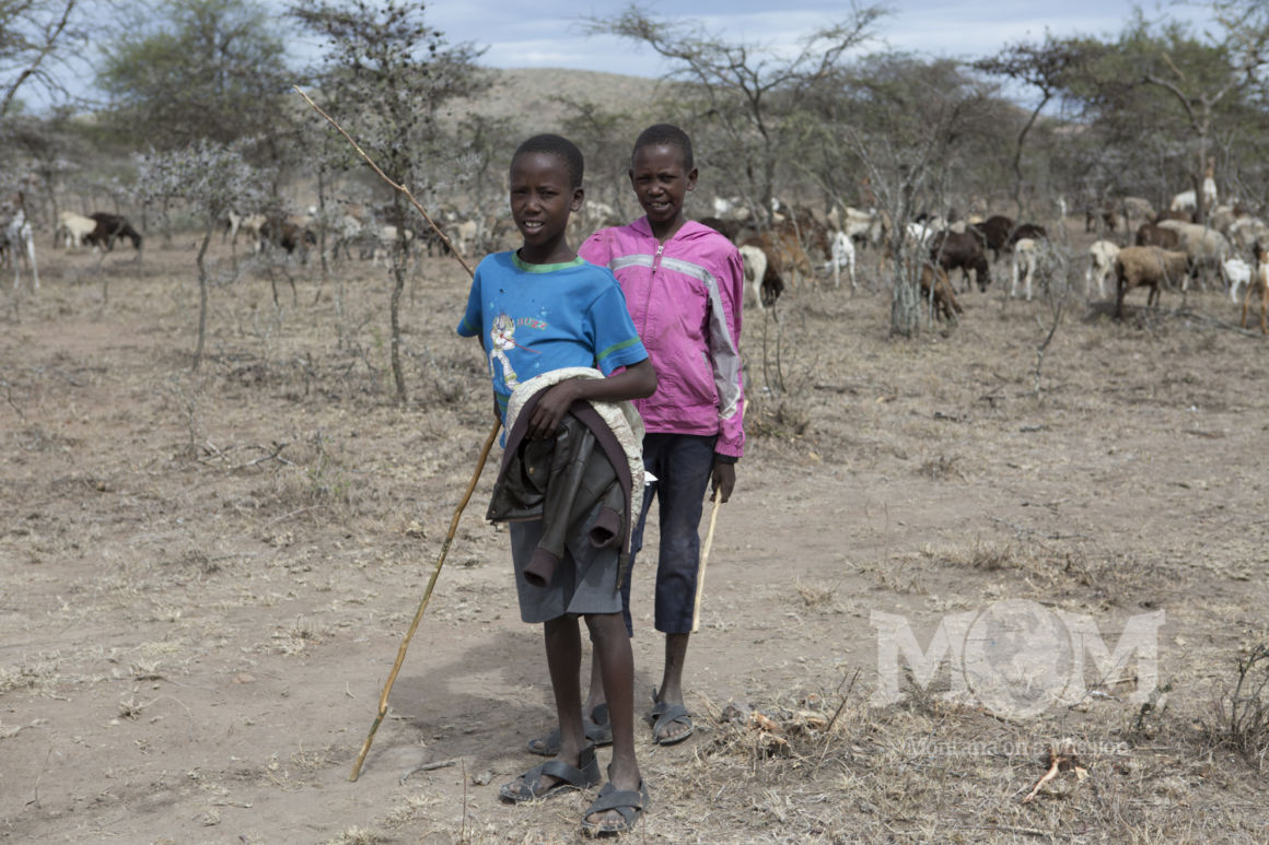 Young boys spend their days looking after a herd of goats and sheep in a dry area of southern Kenya.