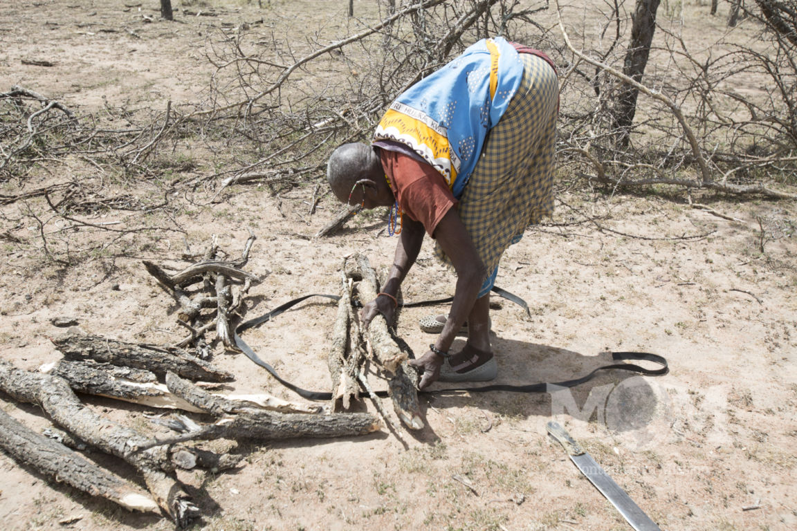 The Maasai women chop at the dead branches with their swords and pile them carefully over the ropes they have laid out on the ground